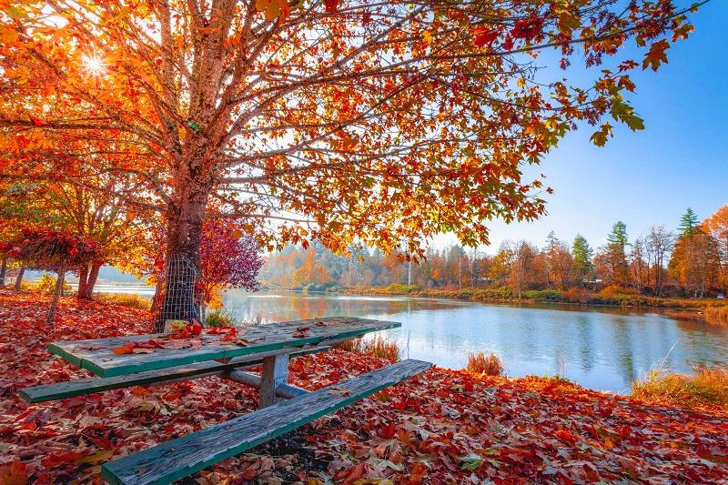 5 Redenen om tijdens de herfst dingen te veranderen